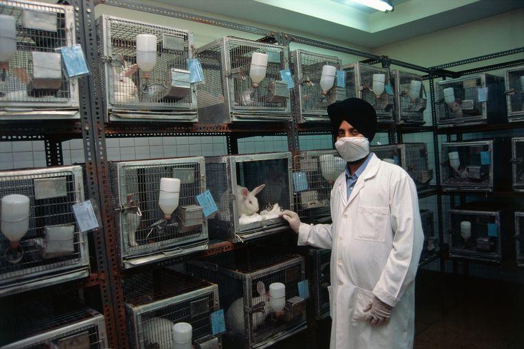 Een laboratorium waar konijnen voor testen worden gehouden. Beeld Corbis