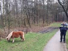 Wijkagent in Maarn brengt ontsnapte shetlander terug bij eigenaar. 'Bijzondere baan heb ik toch'