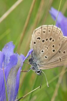Onze vlinders gaan dood door het mestoverschot
