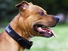 Eigenaar bijtende pitbull vertrokken naar Brazilië, maar hoeft cel niet in: 'Hij is nu geen gevaar'