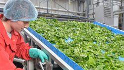 Handel aandeel Greenyard hervat, opent 30 procent (!) lager