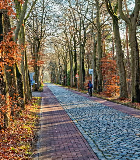 104 bomen plat aan de Veenstraat in Molenschot