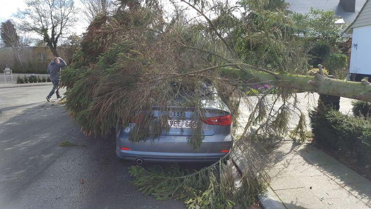 DENDERMONDE - In de Beukenlaan kwam een boom op een auto terecht.