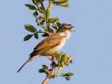 72 soorten vogels hebben dit jaar gebroed in de Blauwe Kamer