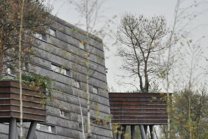Dode bomen in de boomtorens van Kijk...Boschkens langs de A58.