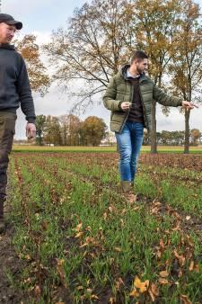 Tijmen en Edwin pakken de bossen van de toekomst bij de wortel aan