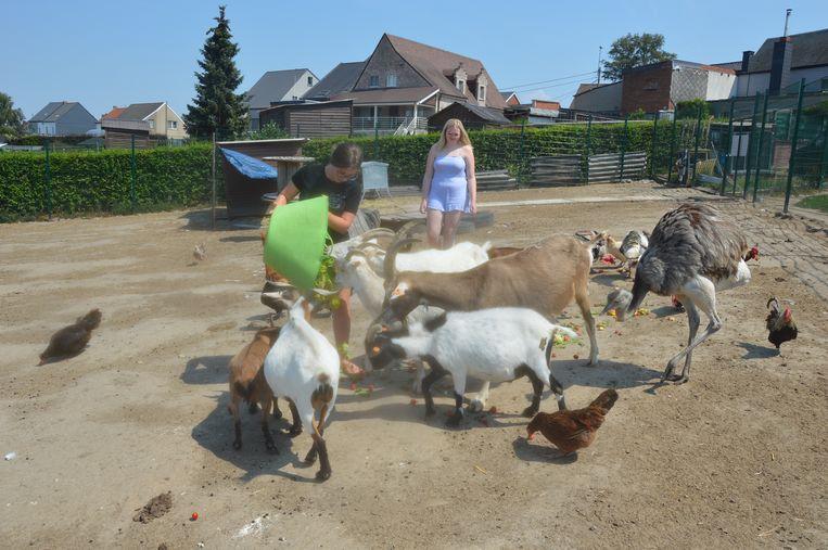 Enkele medewerkers van de Ark van Pollare voederen de dieren.