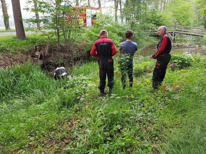 De brandweer heeft de koe uit de gracht van Kasteel Slangenburg in Doetinchem gehaald.