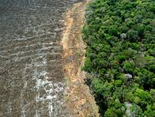 Ontbossing Amazonegebied Brazilië op hoogste niveau sinds 2008