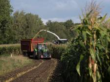 Einddatum oogst voorbij, maar mais deze week 'gewoon' van het land in de Achterhoek