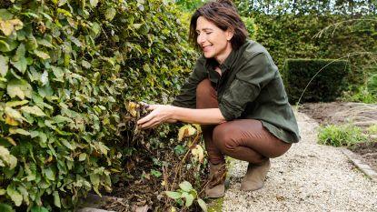 Experte geeft advies: zo bescherm je dieren in je tuin gemakkelijk tegen de koude