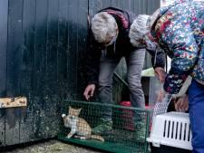 Animal Rights woest: jagers mogen duizenden vossen, zwanen en wilde katten afschieten in provincie Utrecht
