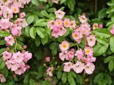 Is de tuin na de zomer ingestort? Zo zorg je voor een constante bloei