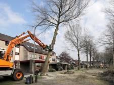 Bewoners Granietstraat zijn na bomenkap nog niet klaar met gemeente Oss