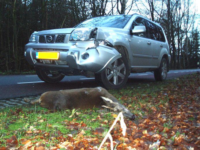 Een aangereden reebok langs de kant van de weg. Elk jaar zijn er zo'n 8000 auto-ongelukken met wild in Nederland.