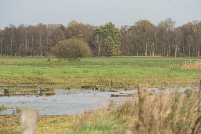 Bosgebied aan de Ligtenbergerweg.