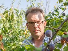Te kleine pruimen: noodkreet voor teler Kees Hamelink gaat viral