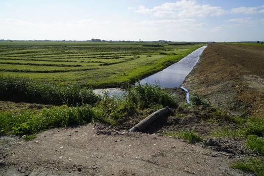 Een van de sloten in het poldergebied rond de Westdijk met hogere concentraties sulfaat en natriumchloride.