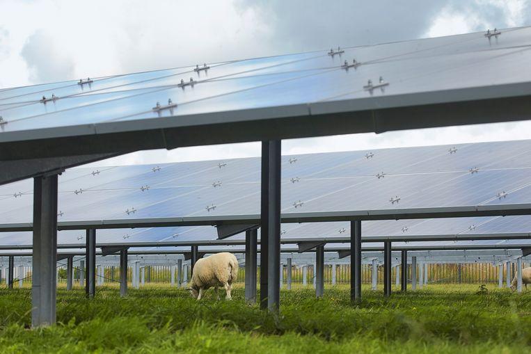 In Oudkarspel grazen de schapen onder de zonnepanelen.  Beeld Hollandse Hoogte / Jaco Klamer