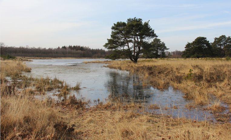 Het Drents-Friese Wold, in het grensgebied tussen Drenthe en Friesland.  Beeld RV