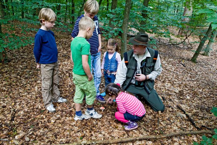 Een boswachter geeft kinderen uitleg tijdens een excursie op de Veluwe.  Vacatures voor de functie zijn populair, zo meldt Staatsbosbeheer.