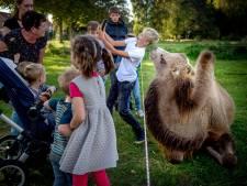 Een selfie met de kameel, het kan in Wijchen