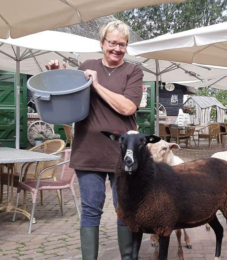 Schaapskooi in Schijndel kan fluiten naar coronacompensatie