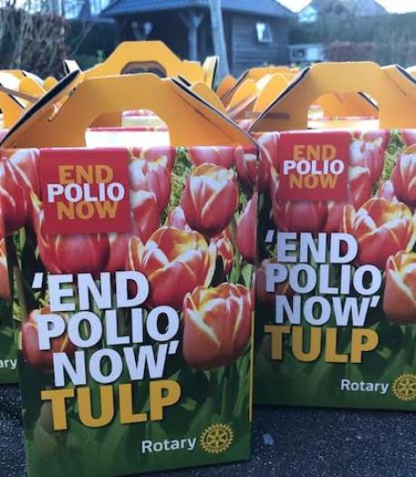 Leden Almelose Rotary planten tulpenbollen voor het goede doel
