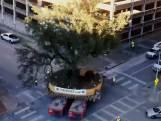Een 300 jaar oude eik verplaatsen door een stad?  Dat doe je zo