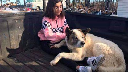 """Familie ontvluchtte bosbranden en speelde hond kwijt. Na 101 dagen zijn ze herenigd: """"Wij zijn zo trots op hem"""""""