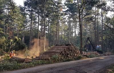 Bomenkap in Ulvenhoutse Voorbos