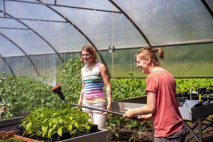 Debby (rechts) en Esther geven de planten in de kas water op zorgboerderij Makandra in Ede.
