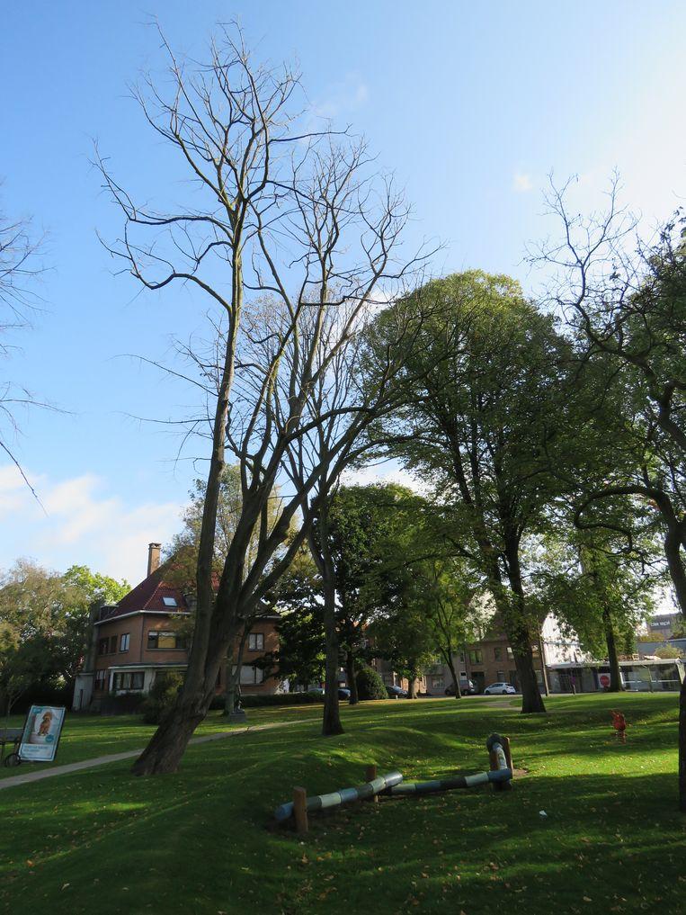 Verschillende bomen in park Van De Walle staan er doods bij.