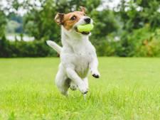 'Hondenbelasting mag, maar geef hondengeld dan ook uit aan hondenzaken'