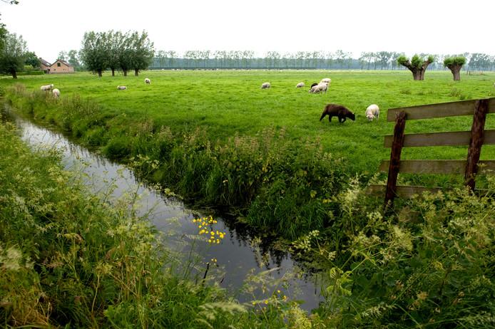 Meer bloemrijke weilanden en bossen in de regio zijn een voorwaarde om in de stad Utrecht 40.000 woningen te realiseren, vinden Siert de Vos en Herman Wierenga.