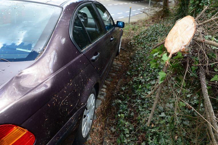 In de Wijnpersstraat in Leuven kwam een boom op de rijbaan terecht. Daarbij werd een BMW 3 beschadigd.