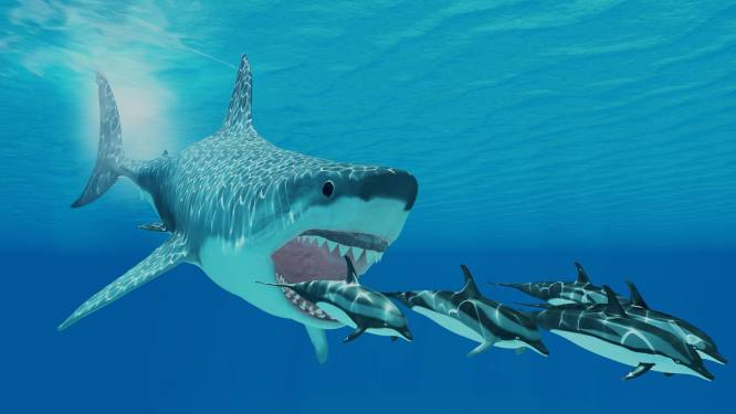 Een derde van alle zeedieren stierf drie miljoen jaar geleden uit, ook de megalodon