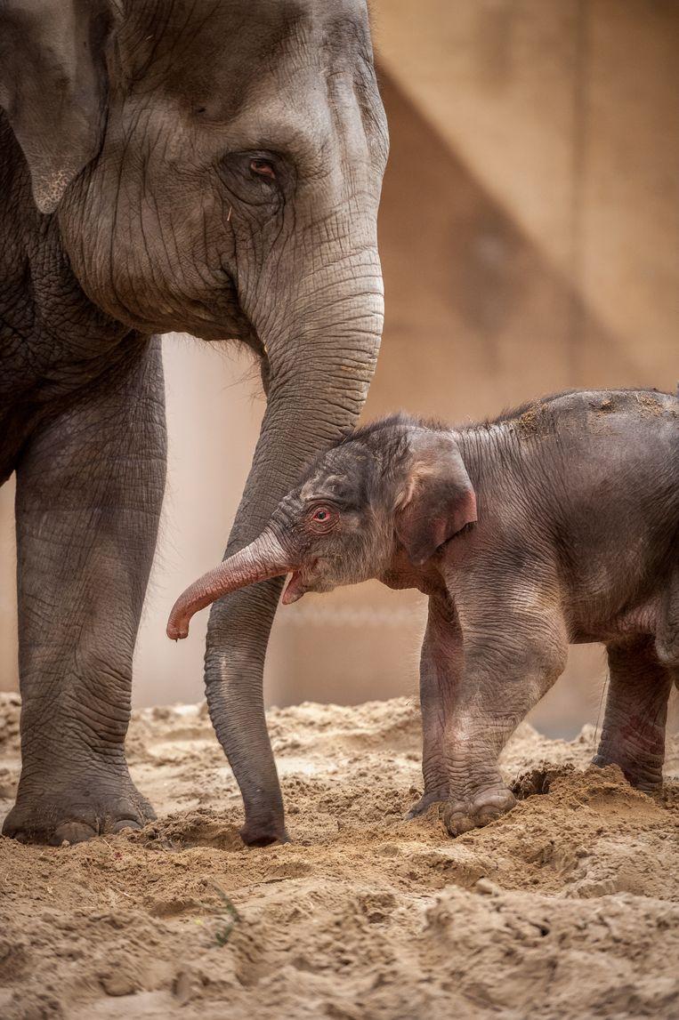 Het pasgeboren jong met mama Kai-Mook