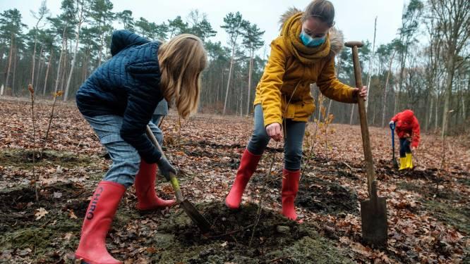 Aanplant nieuw bufferbos op hoek Overdam en Steenovenstraat