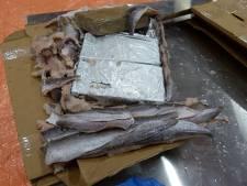 Celstraffen tot 10 jaar geëist voor smokkel van 1100 kilo coke tussen bevroren vis