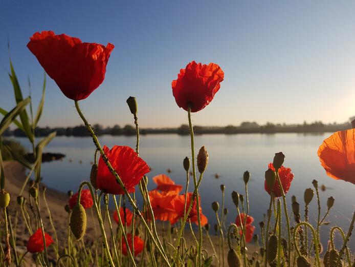 Foto gemaakt bij zonsopgang aan het strandje in Andel, waar de klaprozen volgens de maker duidelijk stonden te shinen.