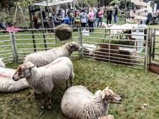 Van streekproduct tot speurtocht op het oerfestival in de Maashorst