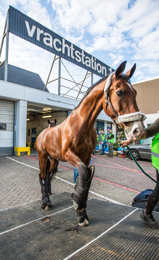 Een paard wordt vervoerd in een truck bij Schiphol.