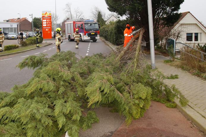 Deze boom op de Veersedijk heeft storm Dennis niet overleeft.