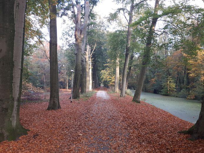 Bij de plannen voor Landgoed Steenenburg is extra aandacht voor flora en fauna.