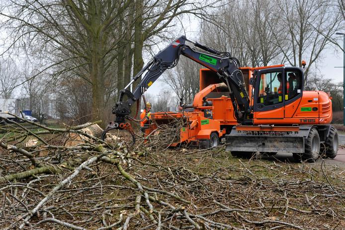 Gemeenten kappen of snoeien bijna altijd buiten het broedseizoen dat van 15 maart tot en met 15 juli duurt. GroenLinks in Oosterhout vindt dat de gemeente per direct alle geplande werkzaamheden moet stoppen.