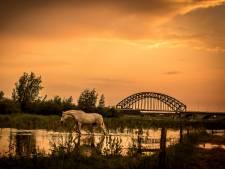 IJsselbrug tussen Zwolle en Hattem vanaf 6 juli bijna vier weken dicht voor autoverkeer