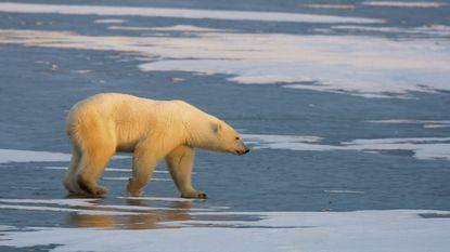 2016 verpulvert derde jaar op rij record als warmste jaar ooit gemeten