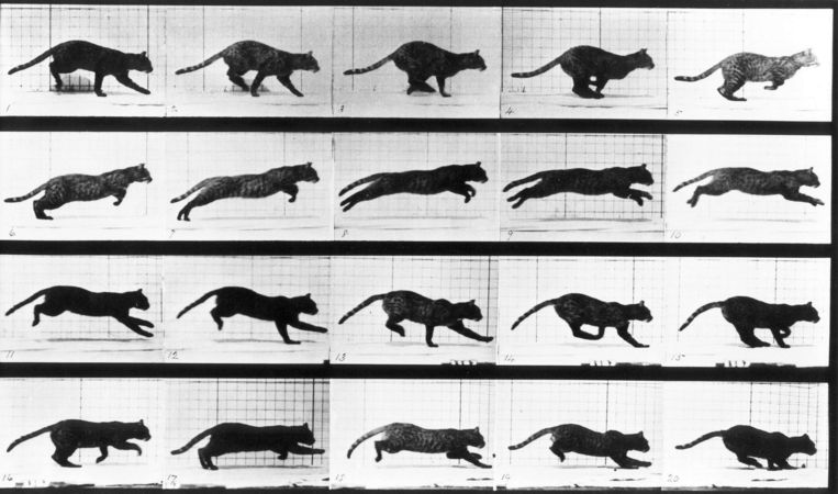 Edward Muybridge's bewegingsstudie uit 1887. Beeld Getty