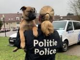 Drugshond Leo is Nederlander te slim af:  twee kilo cannabis onder motorkap in beslag genomen